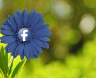 fb-flower